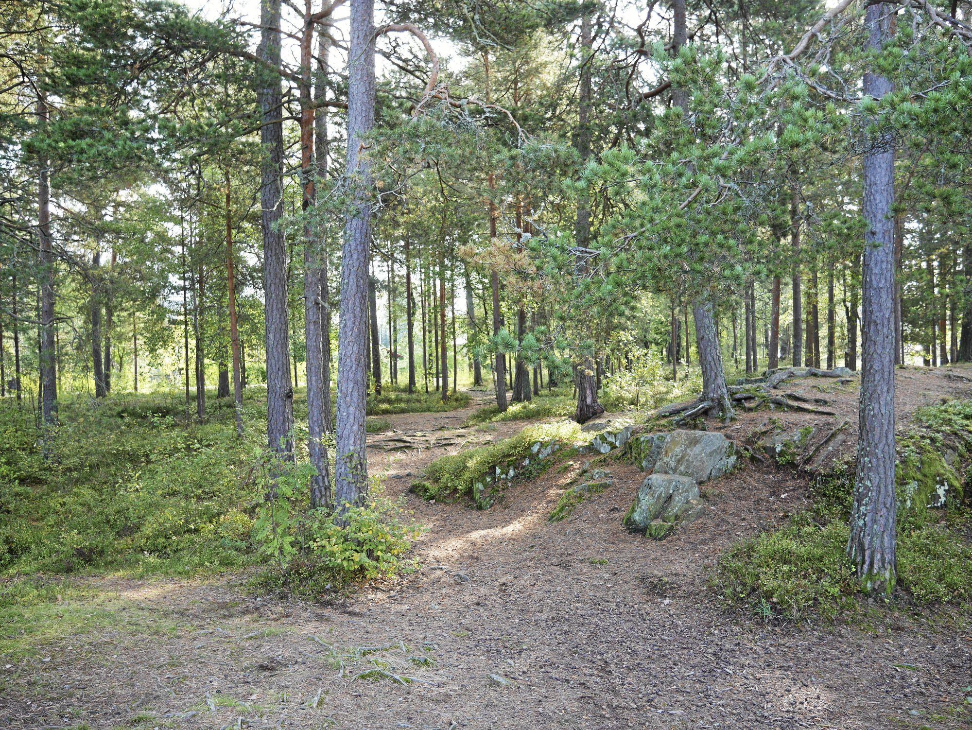 STOR TOMT: Den kommunale eiendommen på Rikeåsen er på over 140.000 kvadratmeter.