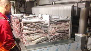 Hvert år går 340.000 tonn hvitfisk-rester fløyten. Her skylles ikke lenger avfallet over bord