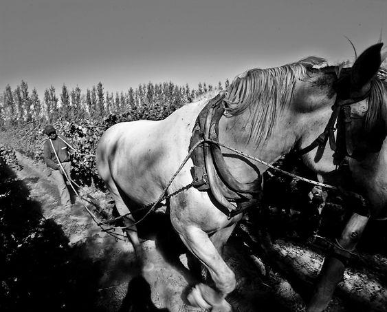 Chacra drives biodynamisk og da trengs hester.