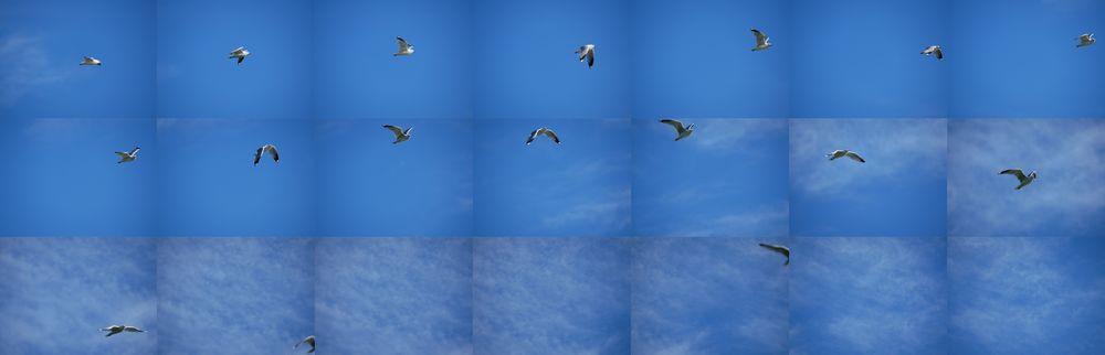 Om vi slet med å følge fugler i flukt? Ja, egentlig, i alle fall når vi kombinerte et stort teleobjektiv med den lille søkeren, og visningsforsinkelsen som kommer når vi skrur skuddtakten til det høyeste. 1/1250s - f/5.2 - ISO 200. JPEG bilder rett fra kameraet, nedskalert og sammensatt.