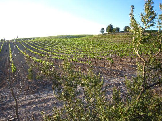 Fra Mainegras vinmarker.