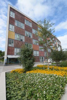Grønt: Hjorthagen er det miljømessig ambisiøse området i Norra Djurgårdsstaden. Et urbant og attraktivt lokalsamfunn med gode offentlige rom og innovative grønne løsninger tar form.