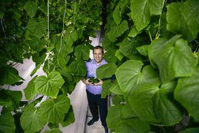 Sjefen for Sahara Forest Project, Joakim Hauge, høstet grønnsaker i pilotanlegget i Qatar. Nå er det flyttet til Jordan.
