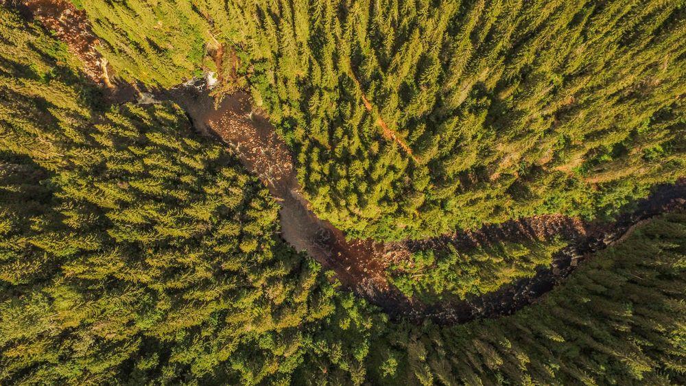 """Norge har mer skog enn vi klarer å ta i bruk. Bildet viser et lite vann i elven """"Synna"""" som renner gjennom en skog i Nord-Torpa i Nordre Land."""