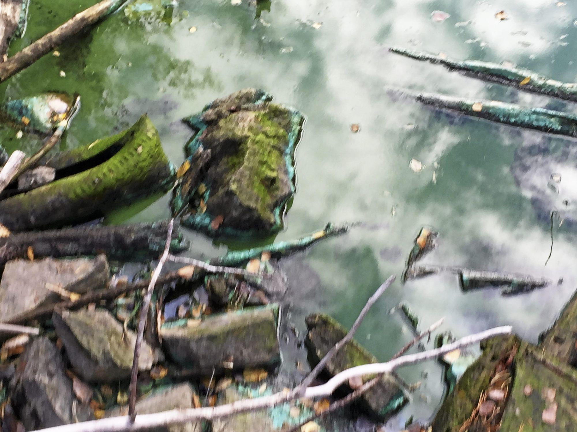 FARGER BREDDENE: Algene er ikke bare på land. De ligger også som en slags blå-grønn, slammete masse på steiner og lignende ved vannets bredder.