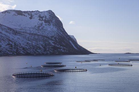 TREDJE STERKESTE: Sjømat, nære land og langt til havs, er ett av næringsfeltene Norge er i særklasse på.