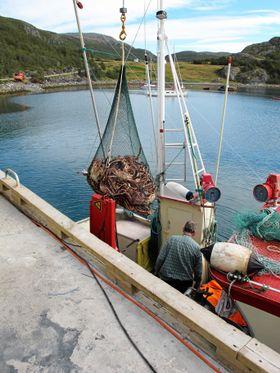 PÅ LAND: Kongekrabbene heises inn på land fra fiskebåten.