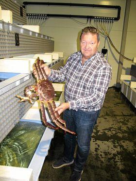 VELVOKSEN: Svein Ruud i Norway King Crab med en velvoksen kongekrabbe. Men de kan bli større, faktisk over 10 kg.
