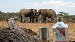 Ny gin med smak av Afrika