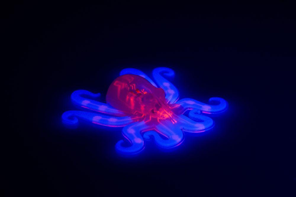 Octobot er en komplett autonom og myk robot. Armene er lyseblå, nettverket er markert rosa. Foto: Lori K. Sanders, Ryan Truby og Michael Wehner, Harvard University