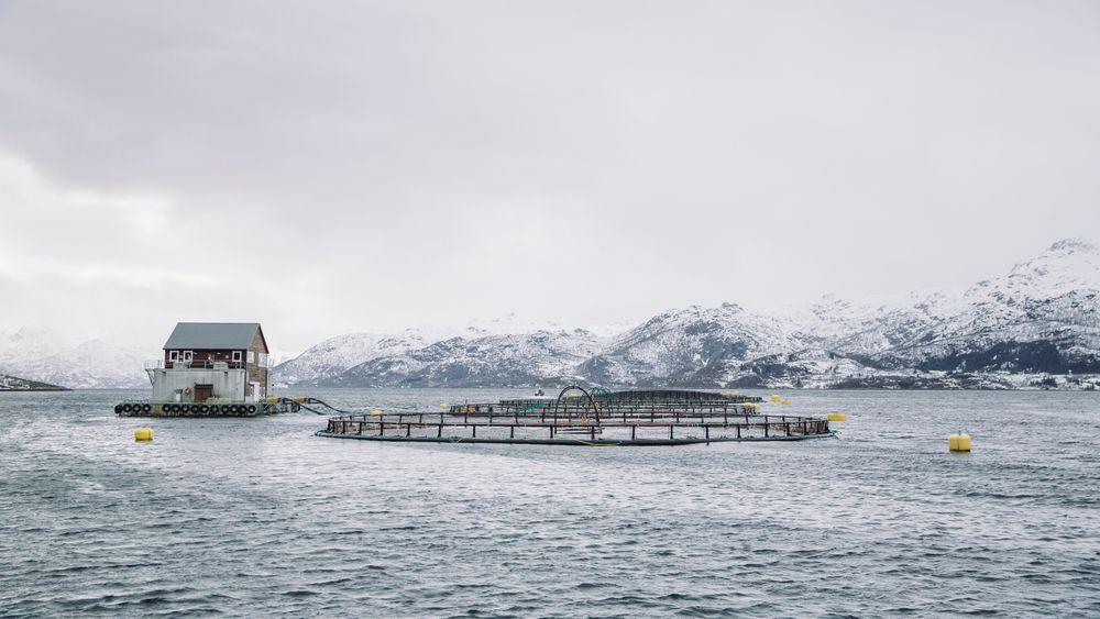 Enova gir støtte slik at Nordlaks får strøm fra land til ytterligere 12 oppdrettsanlegg. Bildet viser ett av selskapets anlegg.