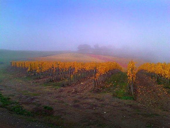 Fra denne vinmarken kommer druene til riservaen.