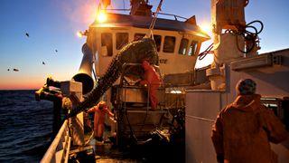 Hver krone omsatt i fiskeri skaper nesten fem ganger så store verdier ellers i samfunnet