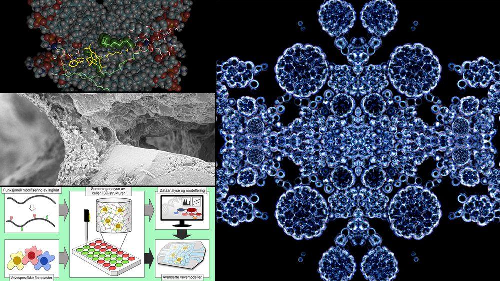 Seks ulike prosjekter har fått til asmmen 110 millioner kroner av Forskningsrådet for å drive nyskaping innen ulike former for bioteknologi.