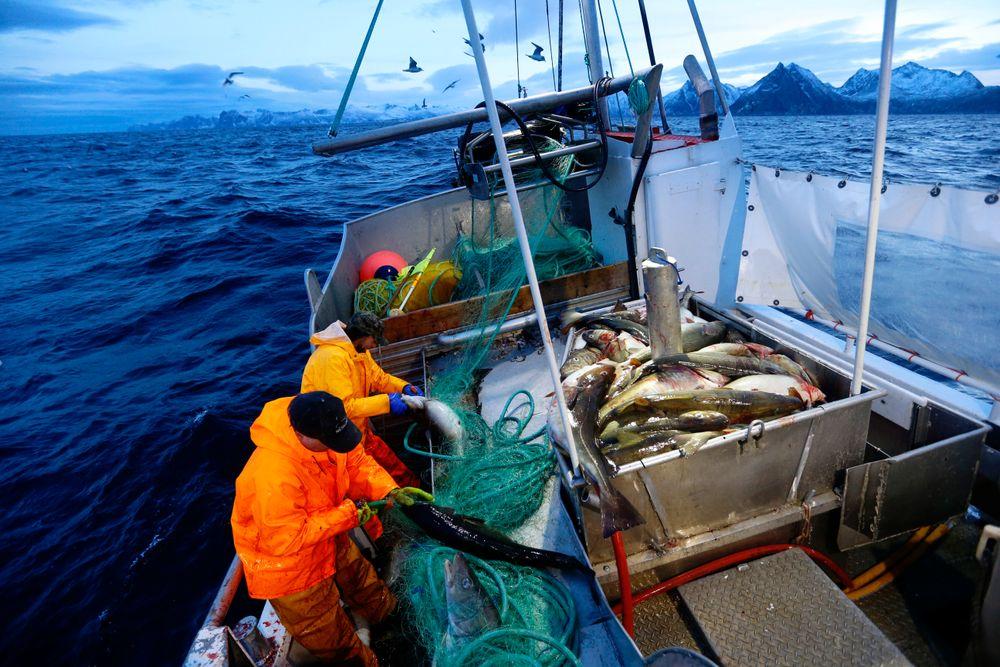 Skipper Trond Dalgård (51) og Jan Gunnar Johansen fisker etter skrei på havet ved Gryllefjord på utsiden av Senja. Statistikken viser at det er risikofylt å være yrkesfisker. Foto: Cornelius Poppe / NTB scanpix