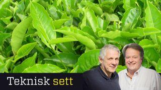 Grønne nitrogenmonstre kunne dominert kloden