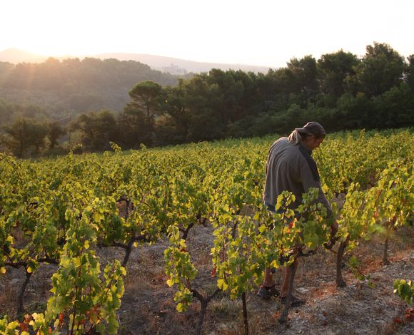 Even Bakke i vinmarkene på Clos de Trias i Ventoux.