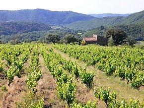 Vingården ligger i Roquebrune i Saint Chinian.