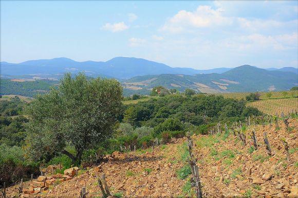 Fra Saint Chinian.I vinmarkene er det brunt - altså jernholdig - skiferjordsmonn.