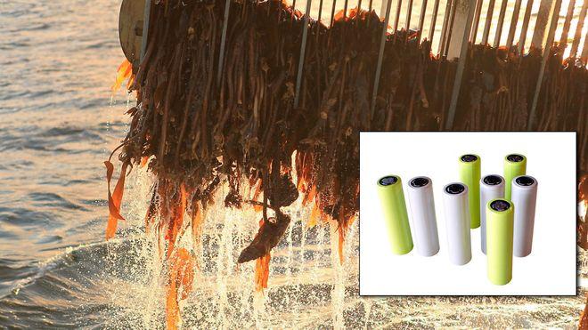 Bindemiddel av alger kan øke rekkevidden på elbiler. Norske forskere jobber for et nytt industrieventyr