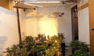 Narkotikaplantasje (2).jpg