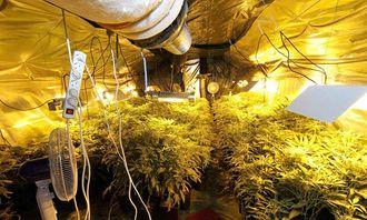 Narkotikaplantasje (1).jpg