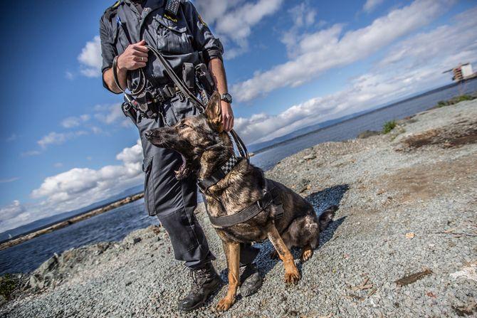 MAKKERPAR: Da gjerningsmannen ble pågrepet på Trondheim Torg brukte hundeføreren de verktøyene som passet situasjonsbildet til enhver tid. Eskalering og reversering av maktmidlene i maktpyramiden gjorde at mannen ble engasjert med pistol, hund, pepper og batong, før han ble pågrepet.