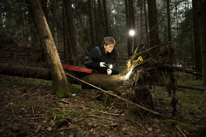 Med lykt og lupe leder Eva etter spor i skogen.