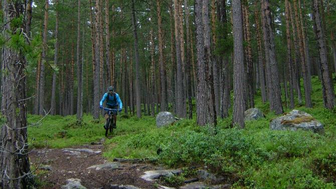 """STISYKLING: Dette er vorte så populært på Kaupanger at sykkelentusiastane sjølve vil trykkja på """"pauseknappen""""."""
