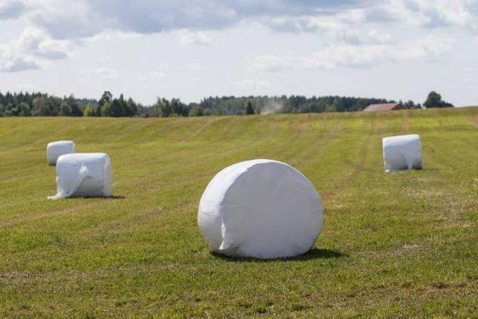 MINDRE UTSLEPP:Korleis kan norsk landbruk produsere meir mat med mindre utslepp? Det er spørsmålet Norges bondelag gjerne vil løyse i samarbeid med forskingsmiljøa. Illustrasjons