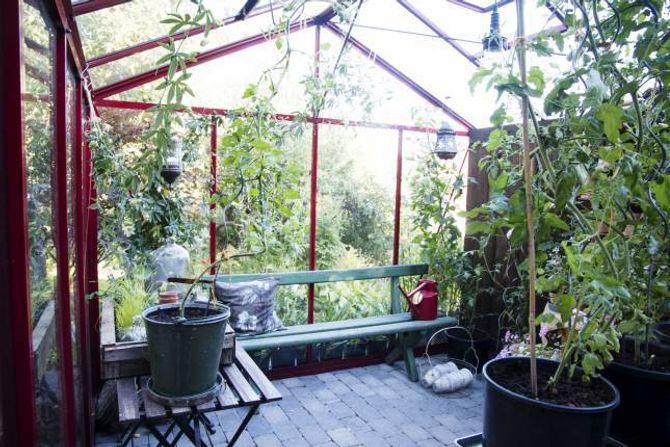 STARTEN: For Andersson begynte hageinteressa å blomstre då ho fekk drivhus for omtrent ti år sidan.