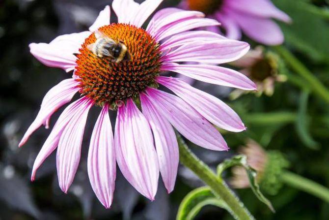 SOLHATT: Den dekorative solhatten har fått plass i hagen.
