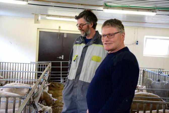 BRØR MED SAME YRKE: Anders og Hallvars Haugen står på dag og natt under lamminga. Det er den mest hektiske tida for ein sauebonde.