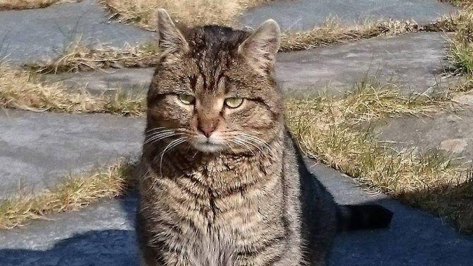 VILLKATT: Både Elisabeth Styve og Randi Aarethun trur katten har hatt ein eigar tidlegare og ikkje er ein villkatt.