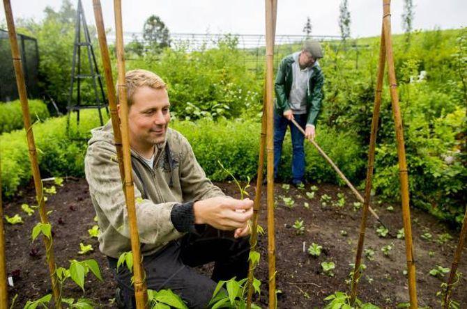 NYTTEVEKSTAR: Kjøkkenhagen gir grøne tilskot til matlaginga. Her hjelp Kenneth Ingebretsen bønnene i ferda oppover bambusrøyra.