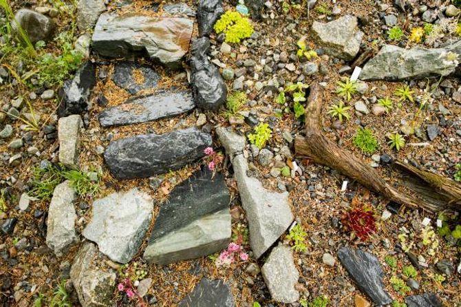 FJELLHAGE: Fjorårets store prosjekt var fjellhagen, der små blomstrar stikk opp mellom steinane.