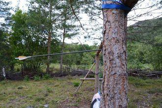 KRAFT: Pilene brukar dei oppatt. Denne pila er skote frå 30 meters hald, og står no kring 6 cm inn i treet.
