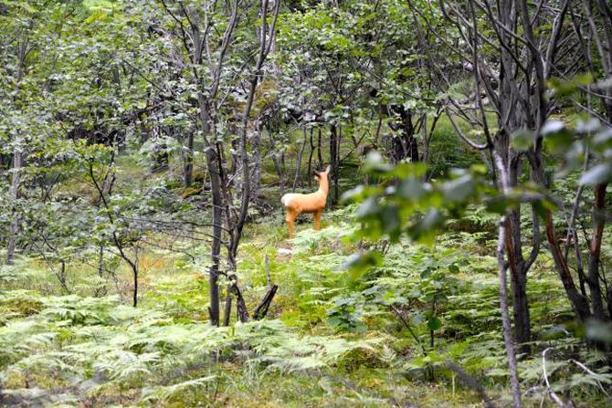 VARIERAR LØYPA: Inne i skogen finn med mellom anna eit rådyr i sitt rette element.