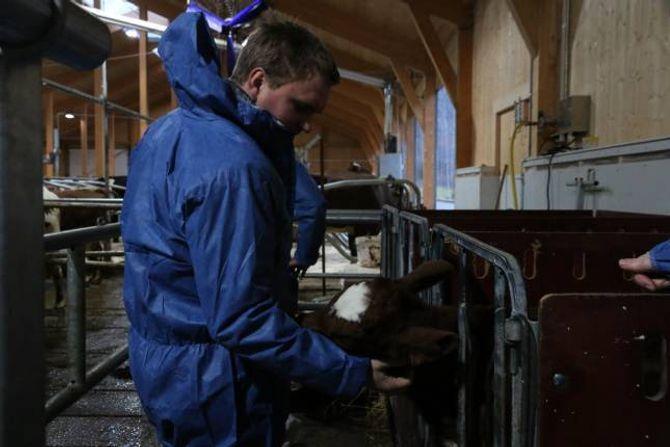 PROSJEKT: Aleksander Øren Heen i Lærdal Næringsutvikling fortel at LNU er i gang med prosjekt ilag med mjølkekyrbøndene i Lærdal.