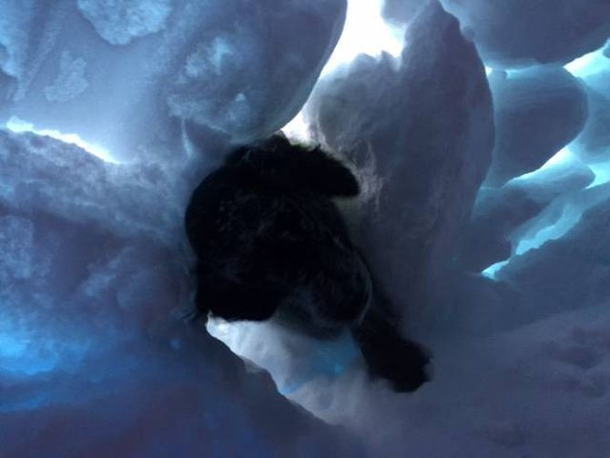 SØK: Her er eine lavinehunden på veg inn i snøhola etter menneskesøk.