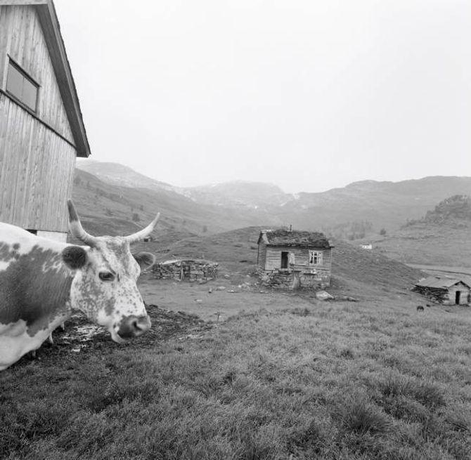 SETER: Setrane var forløparen til fritidsbustadar på fjellet. Her frå Hardangervidda på 1960-talet.