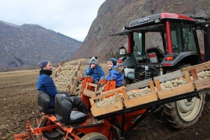 ÅRETS FØRSTE:Årets første poter blir sett i jorda her.Martin Birnis med sonen Håvard og søskenbarnet Tore Molde Voll bakpå traktoren.