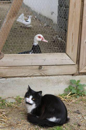 MANGE: Katter, duer og ender er berre nokre av dyra på Nybø Gard.