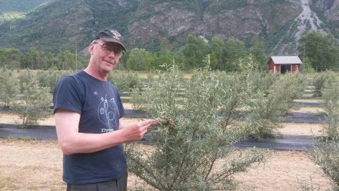 SPENNANDE: Marco Neven er spent på om det vil bli bær på tindveden hans til hausten.