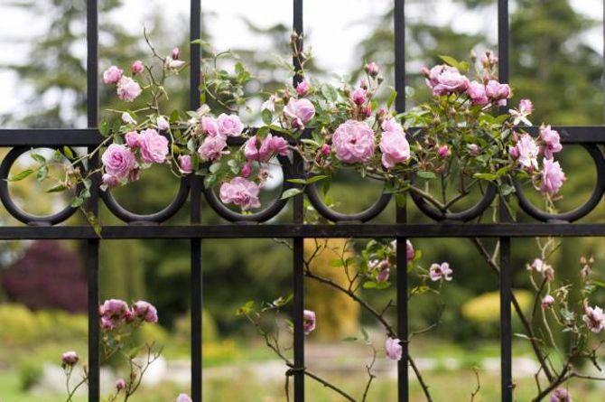 SMIJERN: Eit smijernsgjerde med roser gir eit elegant og nostalgisk uttrykk.