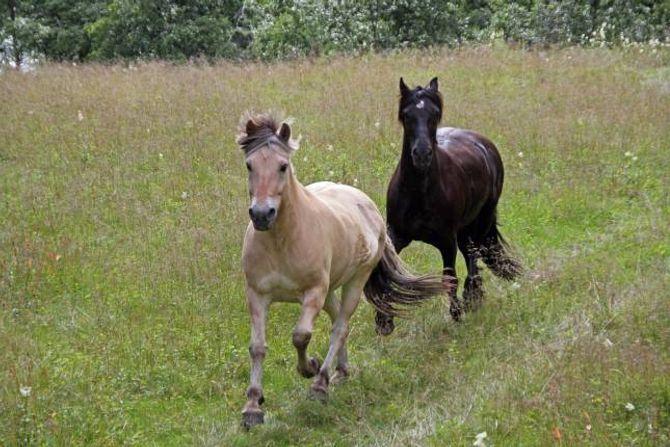 STEMNINGSSKAPANDE: Hestar og andre beitedyr er viktig for å gjera Utladalen stemningsskapande. Privat foto