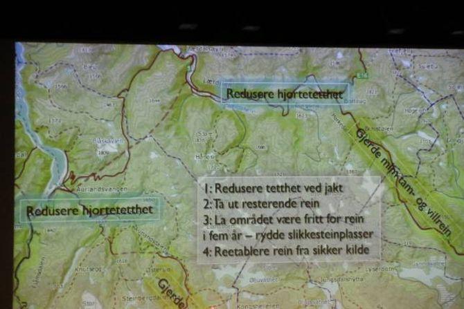 HJORT: Reduksjon i tettleiken av hjort i bestandane rundt Nordfjella vart fremja som eit aktuelt tiltak under informasjonsmøtet i januar. Arkiv