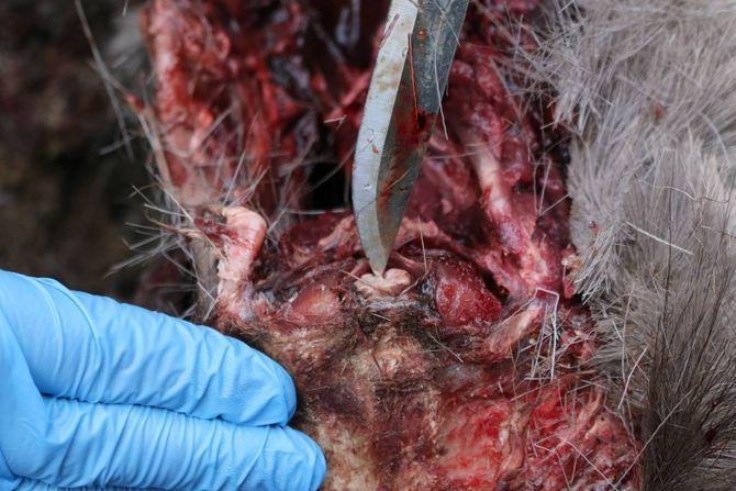 PRØVEN: Det er denne biten i overgangen mellom ryygmargen og hjernen som blir grave ut og testa.