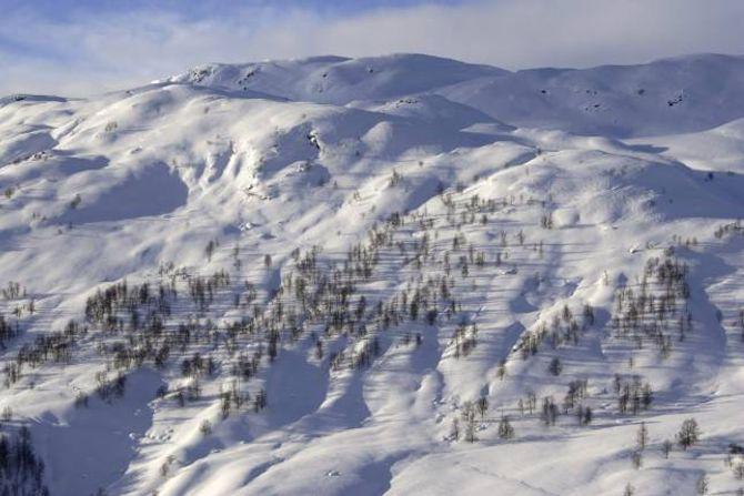OPPOVER FJELLET: Spreidde bjørketre i vakker norsk vinternatur. Dei fleste stader i landet kryp tre- og skoggrensa oppover fjellsidene.