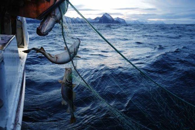FISKENASJON: Fisken ein får i Noreg, er blant den beste i verda, likevel et vi mindre av han.